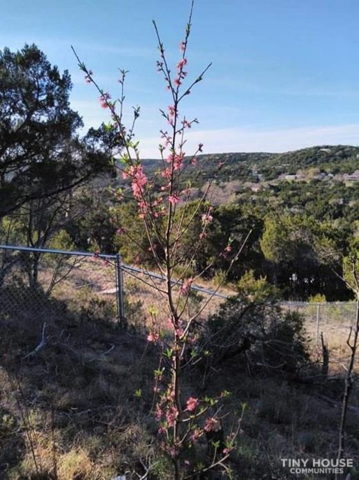 Land for Rent Near Austin
